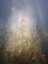 Magisches Licht