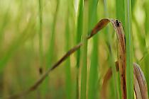 Ameise im Gras