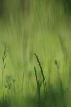 Gras defokussiert